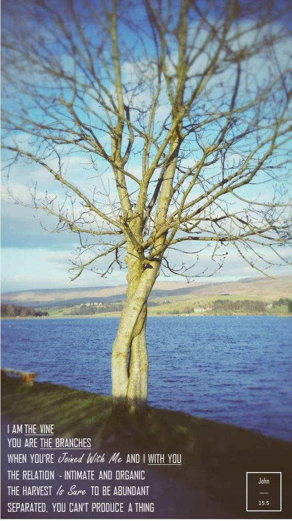 Hollingworth Lake, Abide in the Vine
