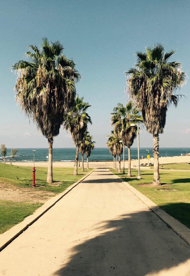 Palm Tree lined paths along the beachfront to Jaffa, Israel