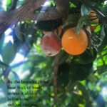 Fruitful tree, Greece, Bear Fruit