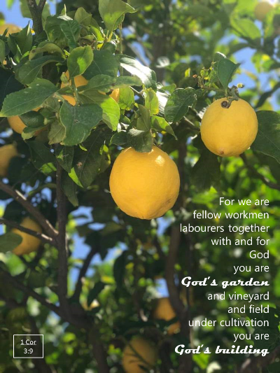 Fruitful trees, Parable of the Sower